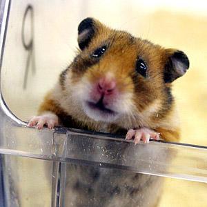 Hamster2 - (Motorradtour)
