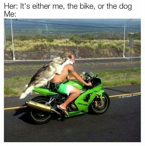 - (Motorrad, Hund, Hund auf Motorrad)