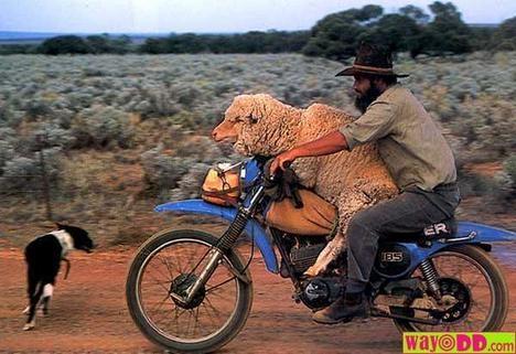 - (Katze, Toleranz, Motorrad Transport Tiere)